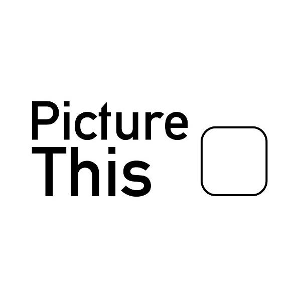 Logo PictureThis